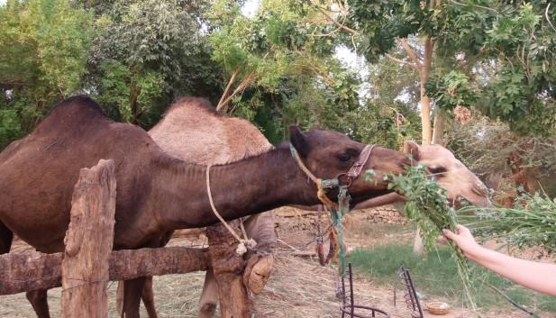 Nubisches Dorf (1).jpg